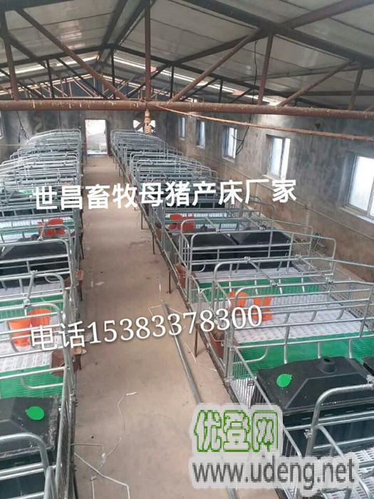 猪场安装哪款养猪设备猪产床防止压伤小猪