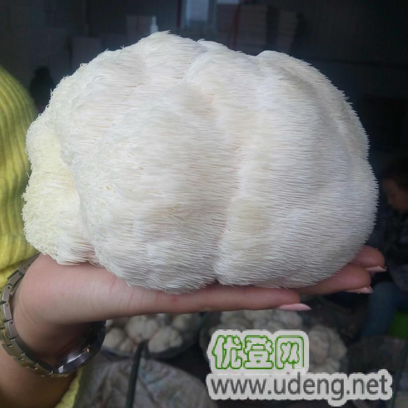 猴头菇,食用菌